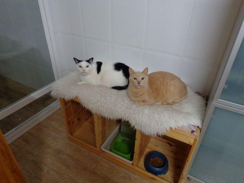C mo transformar un mueble en una cama para mascotas - Transformar un mueble ...